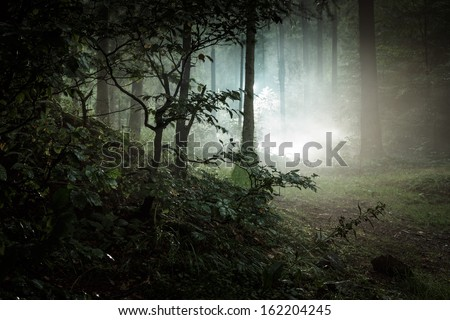 Landscape. Mystery forrest.