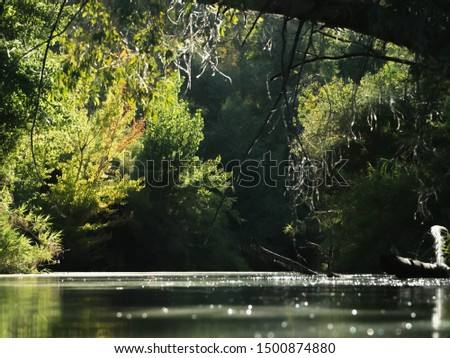 Landscape of a calm water river with lots of vegetation and trees