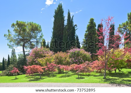 Landscape of a green park with trees, bushes and a bright blue sky