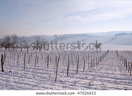 Landscape of a hill with vine under snow