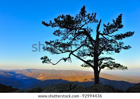 Landscape of a lone tree in silhouette in the Blue Ridge Mountains of Virginia.