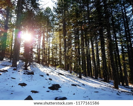 Landscape of a snowy forest  #1177161586