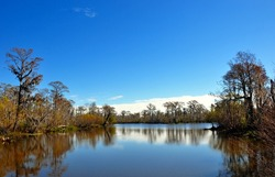 Landscape Of A South Louisiana Cypress Swamp