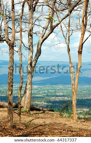 landscape of abstract wither tree with mountain in cloudy day