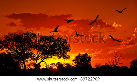Landscape of Africa with warm sunset, beautiful nature, dramatic red sky, silhouettes of big Ibis birds, wildlife safari, Eco travel and tourism
