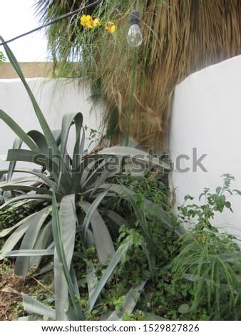 Landscape of an adobe backyard #1529827826