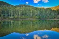 Landscape of australian eucalypts and their reflections on a bright winter's day at Lake Guy, Bogong, Victoria.