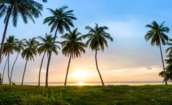 Landscape of beach with coconut trees and sunrise over sea