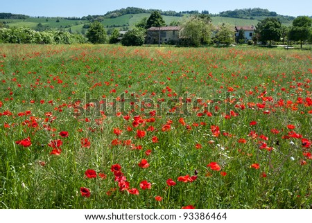 landscape of campaign with meadow poppies