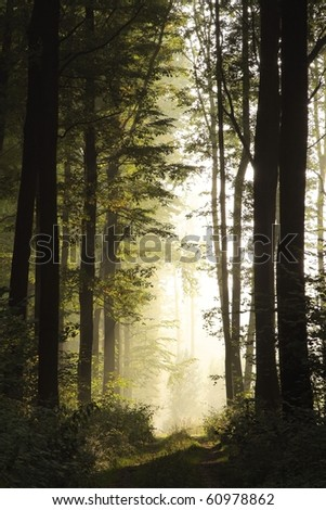 Landscape of deciduous forest on a foggy September morning.