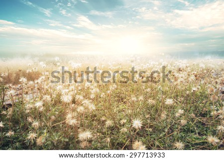 landscape of flower with sun...