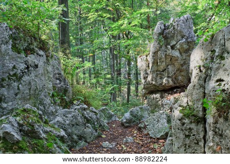 Landscape of forest with stones in National Park, Poland