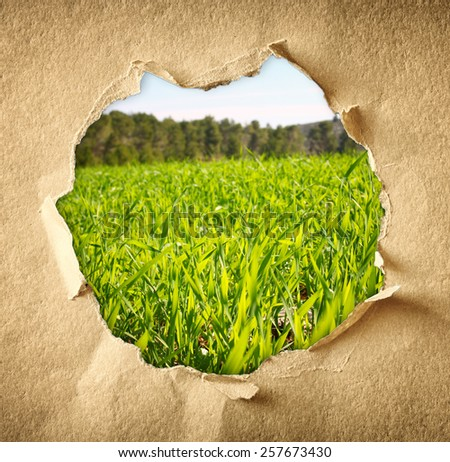 landscape of fresh grass in meadow through hole in paper