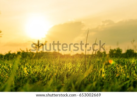 Landscape of grass at sunset with sun beam,Use for abstract background. #653002669
