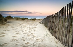 Landscape of grass in sand dunes at sunrise with wooden fences under sand dunes