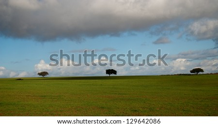 Landscape of green field with trees in Portugal