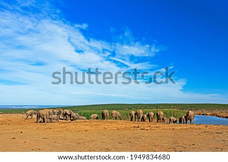 Landscape of herd of elephants at waterhole with cloudy blue sky at Addo Elephant National Park, Eastern Cape Stock photo ©