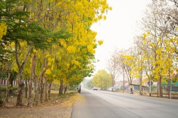 landscape of in Thailand local yellow flowers on the both side of street in the countryside