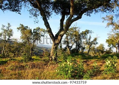 Landscape of mediterranean forest