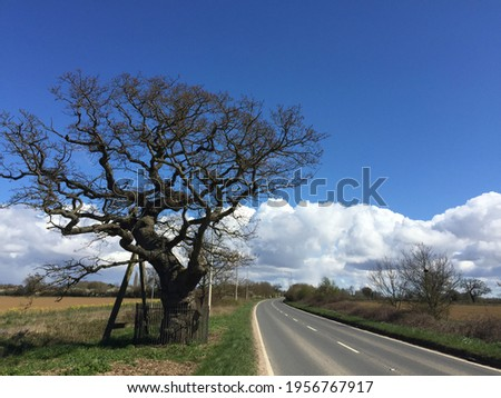 Landscape of old A11 road from Wymondham to Hethersett Norfolk East Anglia view of historic ancient Kett's oak tree and tarmac road with yellow rape seed field and blue sky with white cloud in Spring Stock fotó ©