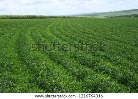 landscape of peanut farm  #1216764316