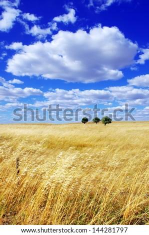 Landscape of portuguese plain, alentejo region