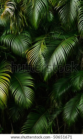 Landscape of rain forest leaf in tropical area.