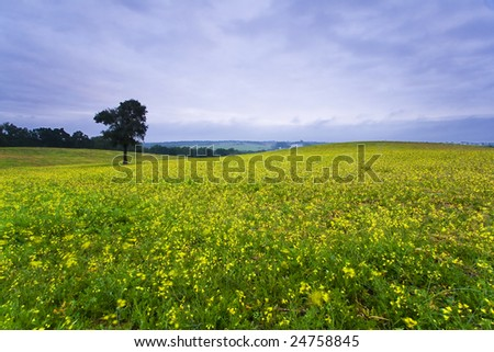 rainy day wallpaper. stock photo : Landscape of rainy day with yellow flowers, green grass and