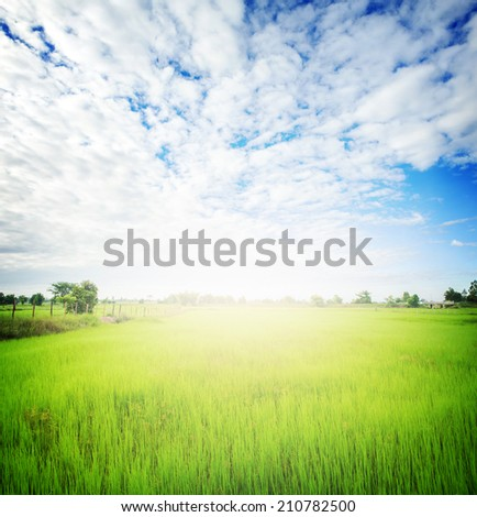 landscape of rice paddy field with lighting effect