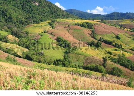 landscape of rice terrace on hill with blue sky background, Asia, Thailand.