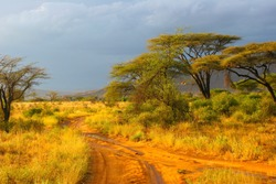 Landscape of Samburu before storm, Samburu, Kenya