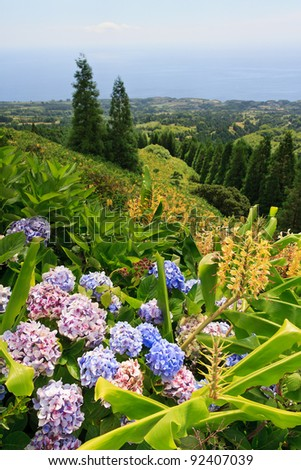 Landscape of Sao Miguel with Hydrangeas and Ginger Lilies in the foreground.