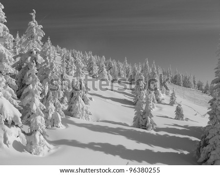 Landscape of snow and snow-covered trees