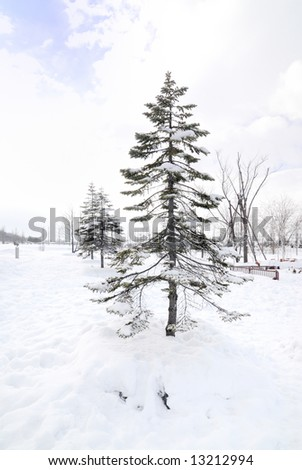 Landscape of snow covered field, taken in Hokkaido Japan