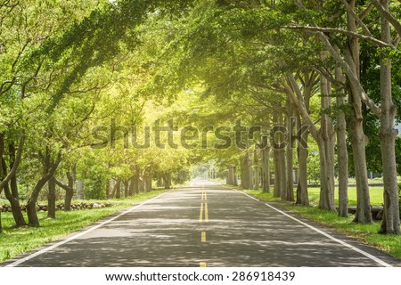 Landscape of straight road under the trees, the famous Longtien green tunnel in Taitung, Taiwan.