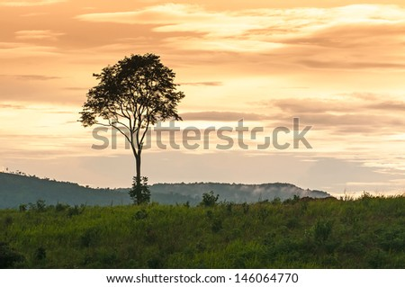 landscape of sunset with cloudy orange sky and a silhouette of tree