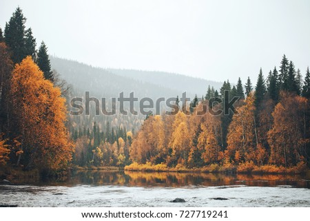 Landscape of the Autumn Nature. Forest River and Trees with Yellow Autumn Foliage Mixed with Green Coniferous Trees - Shutterstock ID 727719241