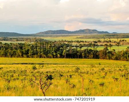 Shutterstock Landscape of the Brazilian cerrado in the Chapada dos Veadeiros, Goiás, Brazil, 2010