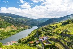 Landscape of the Douro river regionin Portugal -  Vineyards