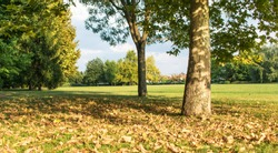 landscape of the park at the end of summer. Autumn is approaching. Leaves fallen from trees on green grass. Trees and foliage in the park.