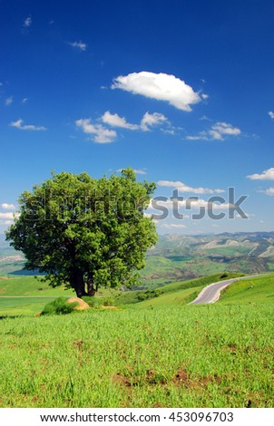 landscape of tree in spring at the countryside - Shutterstock ID 453096703