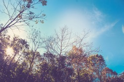 Landscape of trees and sky. Vintage filter tone.