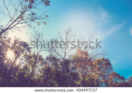 landscape of trees and sky....