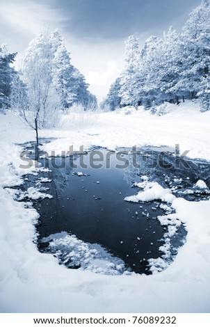 landscape of trees covered with snow