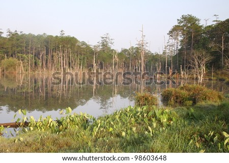 landscape of wetlands and tropical forest - stock photo