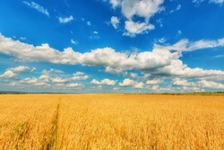 Landscape of wheat ears and blue cloudy sky