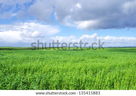 Landscape of  wheat green field