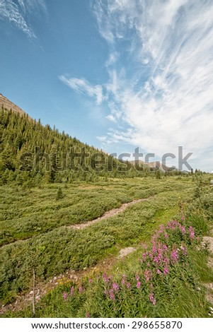 Landscape of wild flowers and a beautiful sky in the Highwood Pass located in Alberta, Canada.