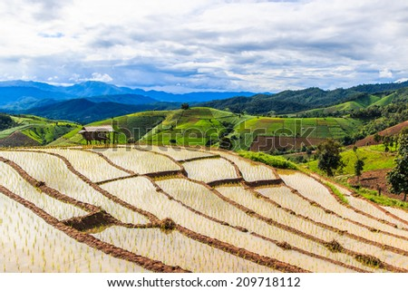 Landscape Paddy - rice fields at pa pong peang  chiang mai asia Thailand