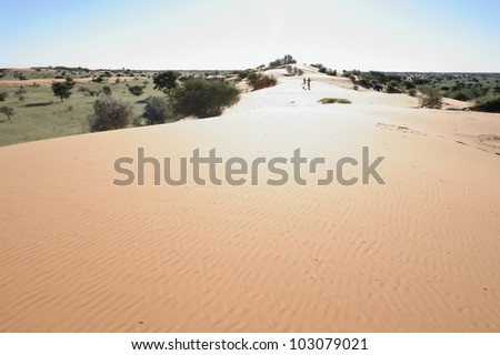 Landscape painter on a dune in the Kalahari,South Africa
